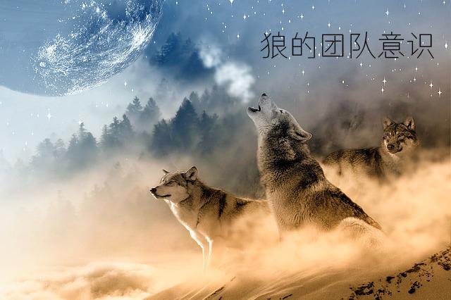 狼性团队精神